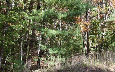Lot 1 Tomahawk Trail, Blairsville, GA