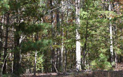Lot 2 Tomahawk Trail, Blairsville, GA