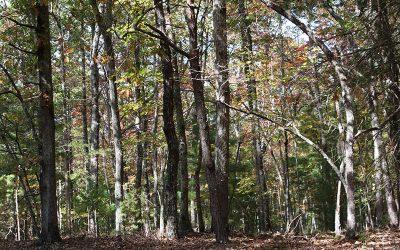 Lot 3 Tomahawk Trail, Blairsville, GA