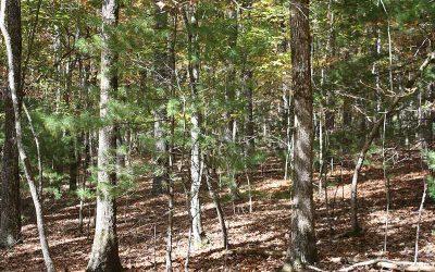 Lot 4 Tomahawk Trail, Blairsville, GA