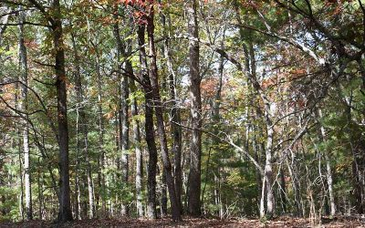 Lot 5 Tomahawk Trail, Blairsville, GA