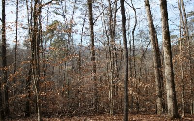 Lot 67 Timberline Acres, Young Harris, GA